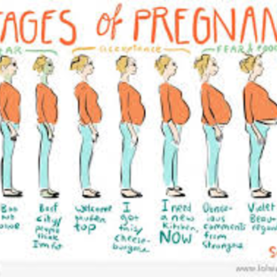 pregnacy timeline
