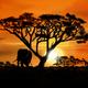 African landscape by dasflon d5l9t7c5