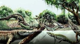 Oligocene, Miocene, and Pliocene epoch timeline