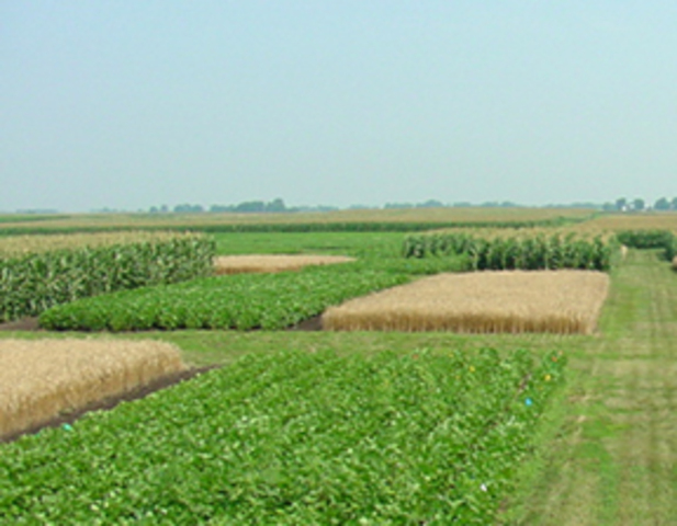 Four Year Crop Rotation is Introduced