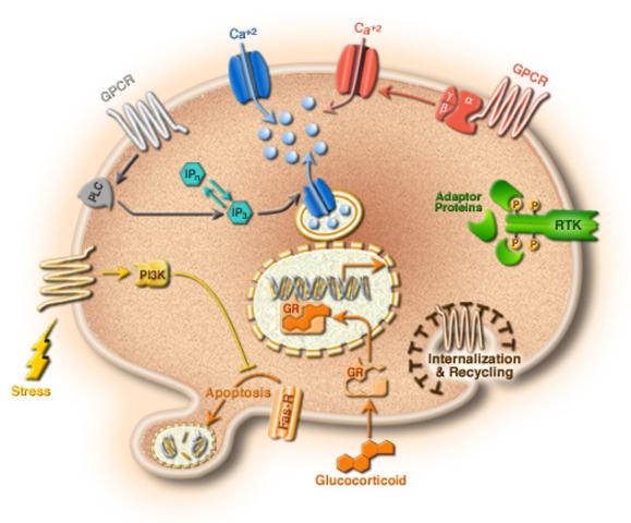 Cell Bio