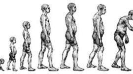 lifespan timeline