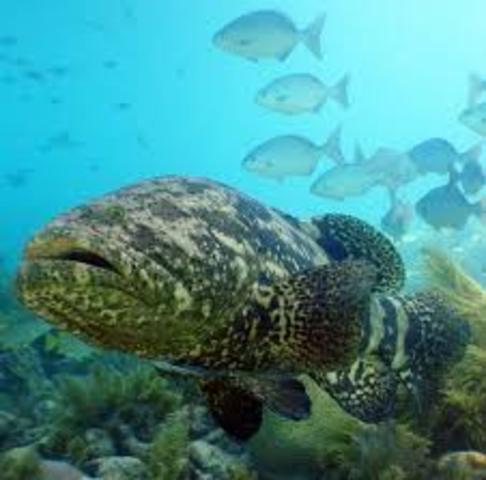 Threatening ecosystems