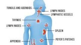 Immune System timeline