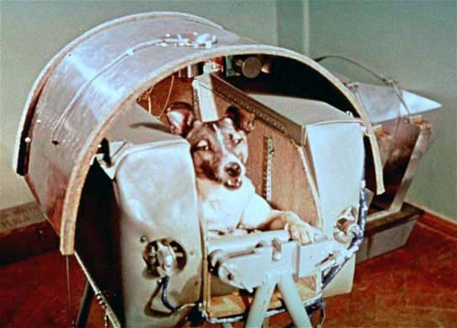 the first animal in space