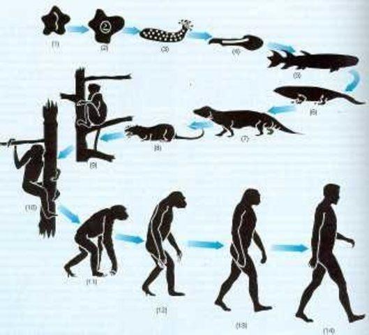 Teoría de la Selección Natural