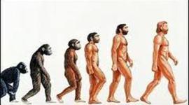 EL ORIGEN DEL SER HUMANO timeline