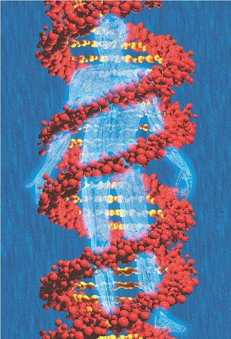 Πρότυπο των ζωνών στα ανθρώπινα χρωμοσώματα.