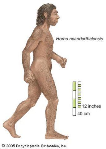 Homo neandertal.Hace 230.000m años.