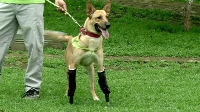 Artifical legs for dogs