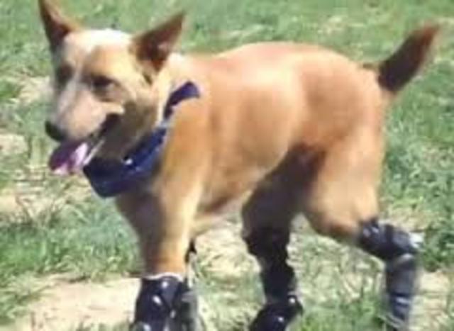 dog 3d printed legs