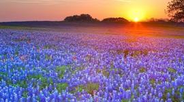 Texas History Timeline!