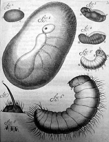 ANTON VAN LEEUWENHOEK, EL PRIMER CAZADOR DE MICROBIOS