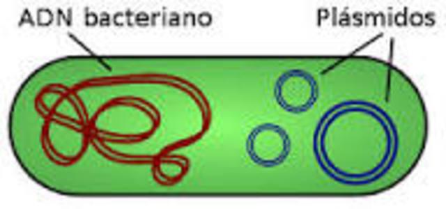 Joshua Lederberg introduce el concepto de plásmido.