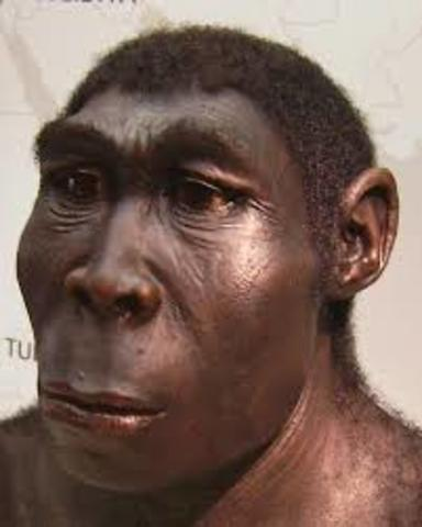 1.8Million-143,000Years ago Homo Erectus lived