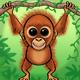 Orangutang   karlie