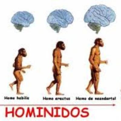 Hominidos timeline