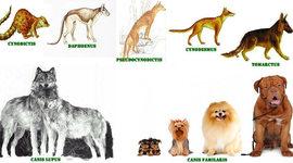 La evolución del Perro  timeline