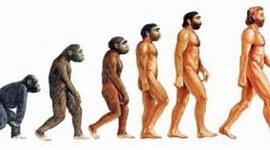 Línea de la Evolución Humana timeline