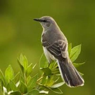 """To Kill a Mocking Bird"" by Harper Lee timeline"