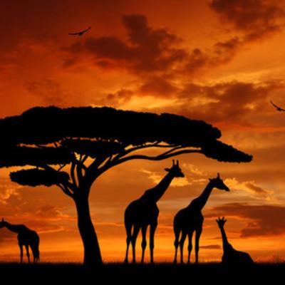 Episoder i Afrika timeline