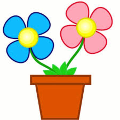 Madeline a vu les fleurs