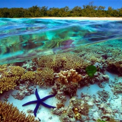 The Great Barrier Reef timeline