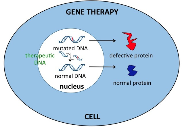 importance of gene therapy which is the therapeutic delivery of nucleic acid polymers into a patient Non-viral gene delivery a wide arrayutilises of delivery systems including cationic polymers, liposomes, proteins and peptides which have the ability to package nucleic acids and deliver them into cells [13.