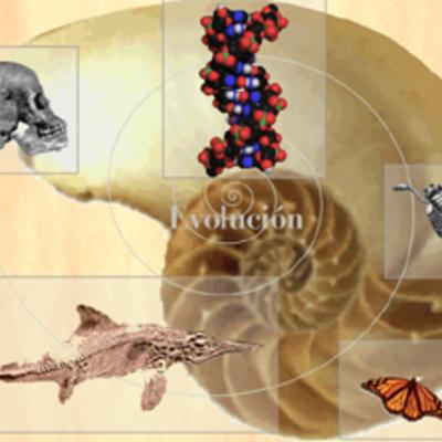 El largo camino de la Evolución timeline