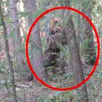 Reports about sightings of Bigfoot timeline