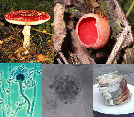 Lesson 3: Decomposers