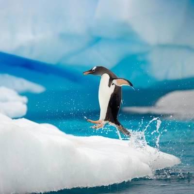 Rebecca's Antarctic History Timeline (Task 9)