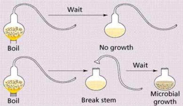 Louis Pasteur Disproved Spontaneous Generation!