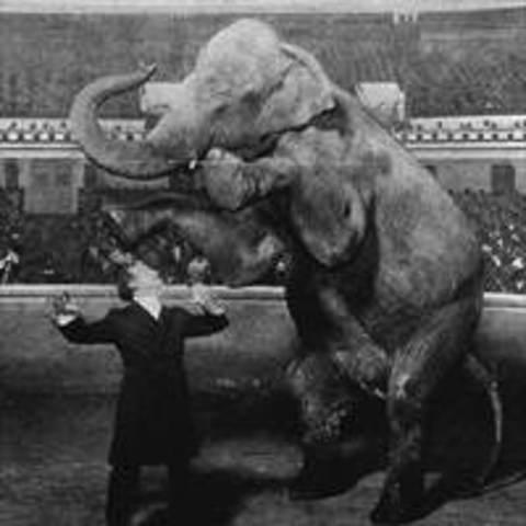 ONE ELEPHANT TO GO