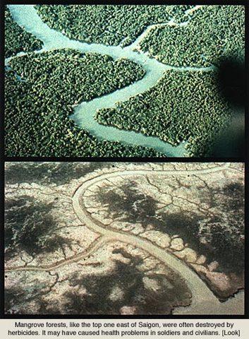 Ecocide-Vietnam