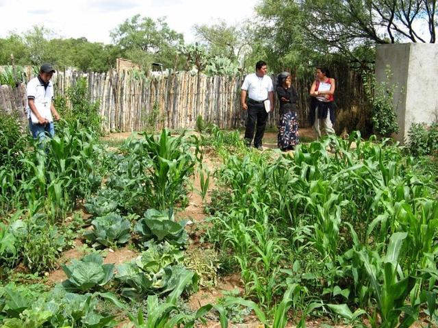 La FAO pone en marcha el Programa Especial para la Seguridad Alimentaria (PESA)