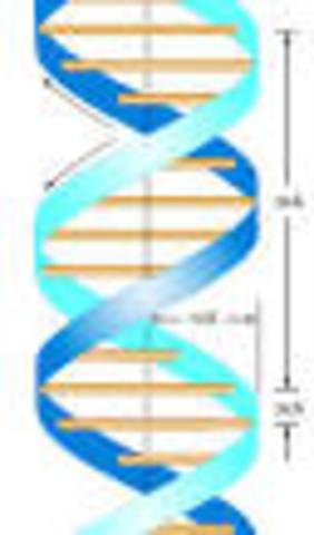 Estructura en doble hélice del DNA