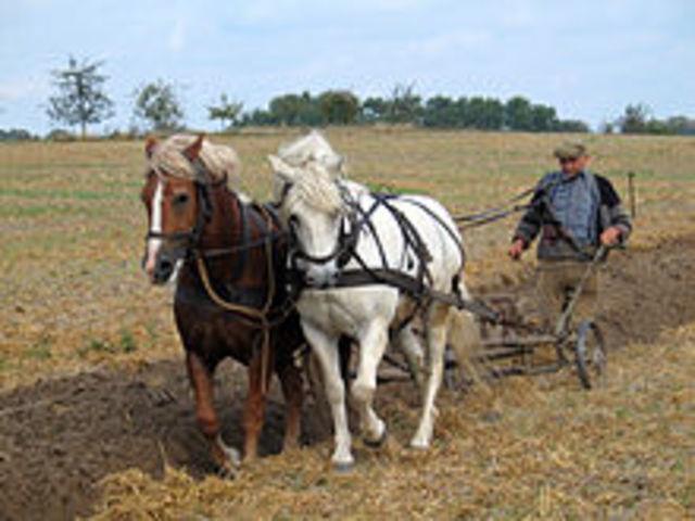 El arado  de la tierra con caballos