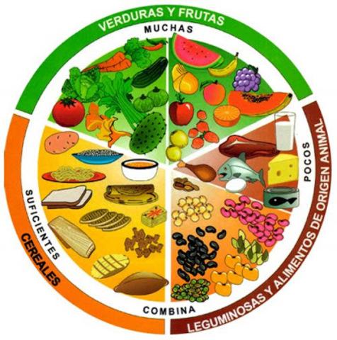 Se crea la rueda de los alimentos