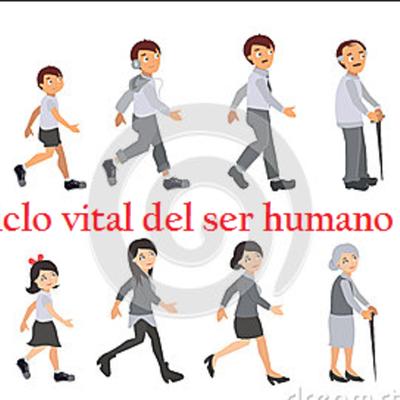 CICLO VITAL DEL SER HUMANO- JIMENEZ ALMA timeline