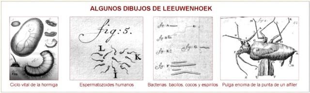 Descubrimiento de bacterias. Antoni van Leeuwenhoek.