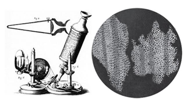 Observación de la primera célula.Robert Hook.