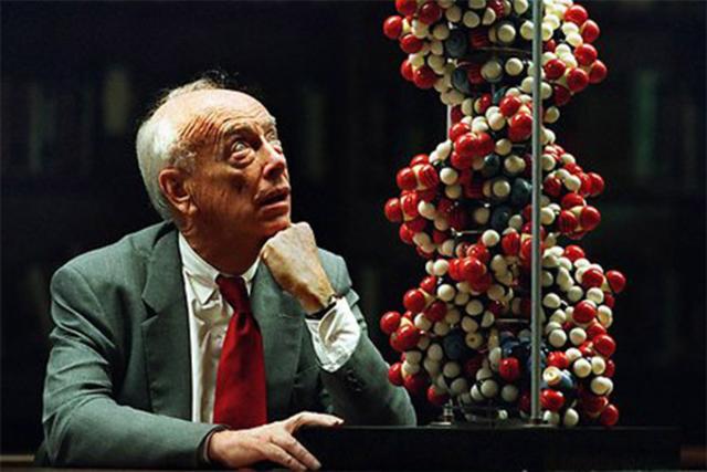 Descubrieron la estructura molecular del DNA. James Watson y Francis Crick.