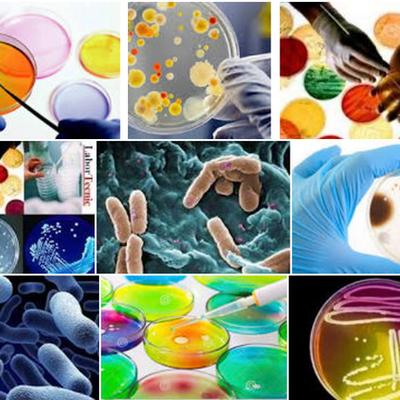 EVENTOS IMPORTANTES PARA EL DESARROLLO  DE LA MICROBIOLOGÍA timeline