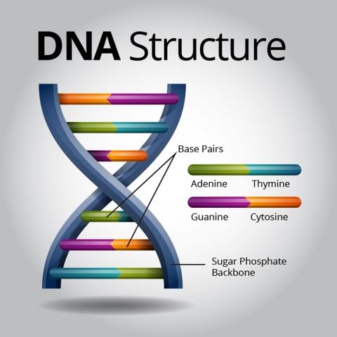 Se descubre el ADN