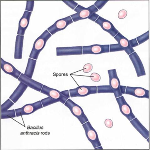 se demuestra que el bacillus anthracis produce el antrax