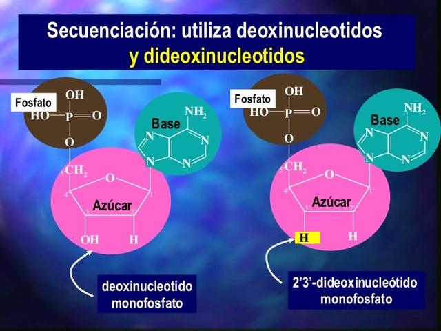 se desarrolla el método de los dideoxinucleótidos para la secuenciación del ADN