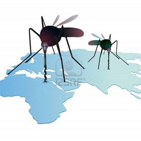 se observa que la fiebre amarilla la producen los mosquitos