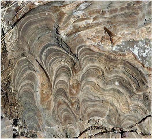 1:33PM Fossils of Stromatolites