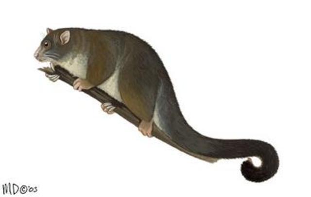 9:59AM First Mammals